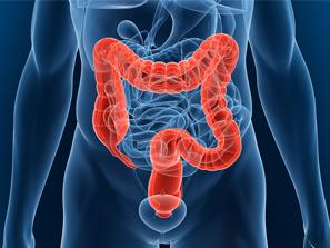 El colon, la llave a una salud vibrante